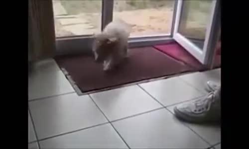 Умното куче