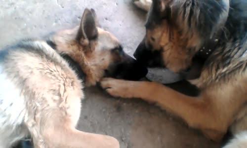Кучешка любов!