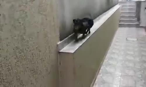 Куче на задна скорост!