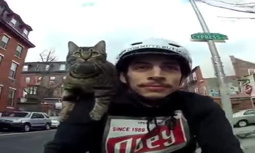 Коте велосипедист