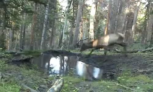 Скрита камера в гората!!!