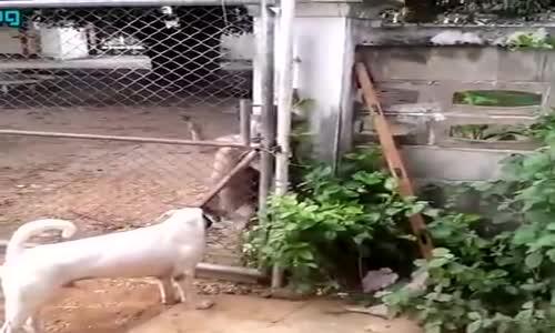Куче – катерач!