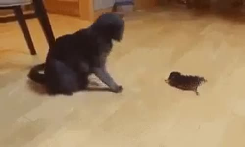 Мама котка и бебе коте