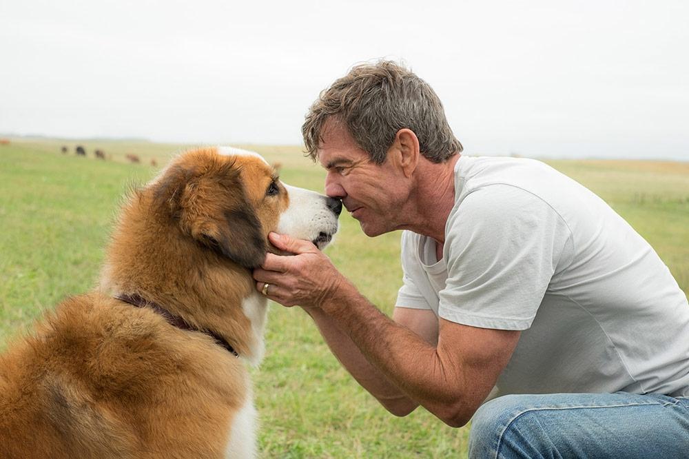 Кучешки живот (2017) трейлър озвучен на български