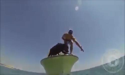 Куче лови омари !