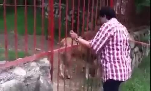 Любов и доверие между лъв и човек!