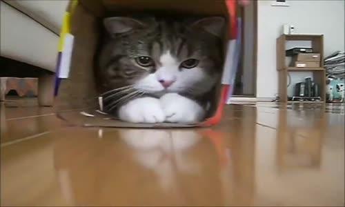 Котарак в кутия!