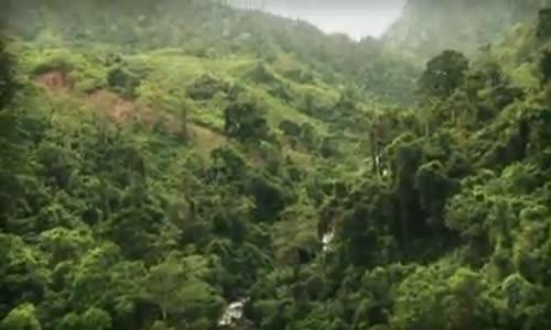 Музика от джунглата!