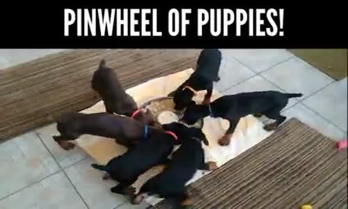 Храненето на малките кученца