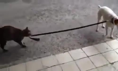 Вижте как котка води куче за каишка