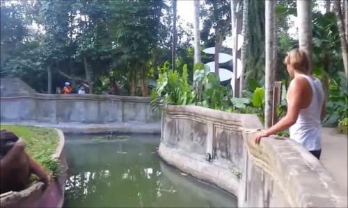 Умна маймуна